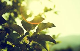 Simple Ways To Have A Greener Home