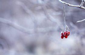 Frozen Berries Red Fruits 64705